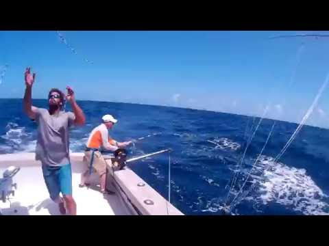 Sailfish Fishing Isla Mujeres Mexico on Qualifier Charter Boat 2016