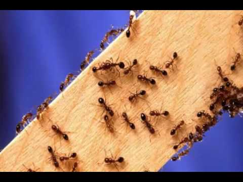 Control Ants in Bathroom: Getting to Know Moisture Ants