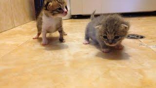 Как да отгледаме новородени котенца