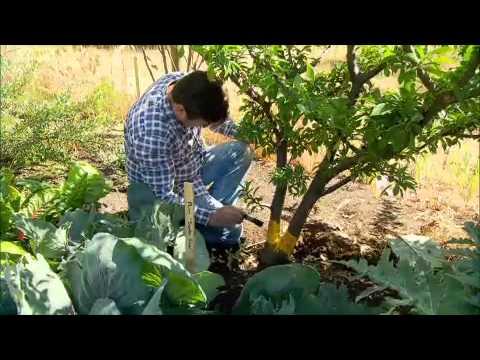 The Garden Gurus -   Fruit Fly Bait Recipe