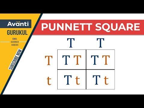 B27.1.4 Punnett Square (Hindi)