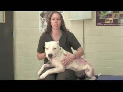Veterinary Procedures - Obtaining a Fecal Sample