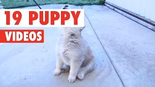 19 Puppy Videos Compilation 2017