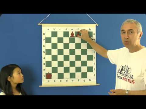 Avoiding the Stalemate - Chess for Beginners
