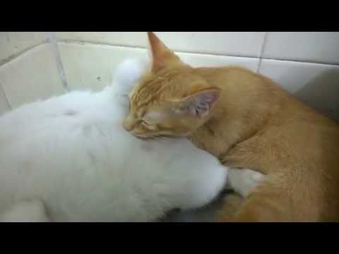 Cat Massage aka Thai Massage