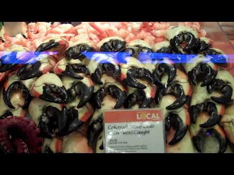 Stone Crab Claws of the Colossal kind!