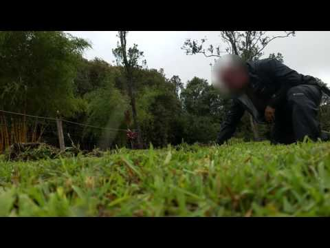 Feral Pigs, Hunting & Hunters