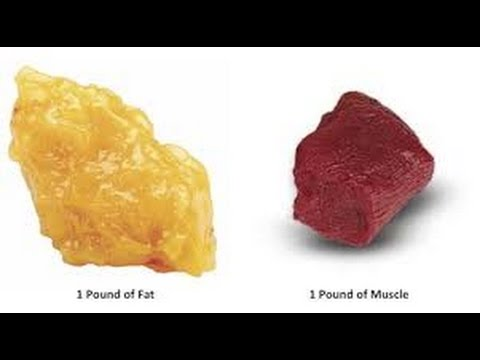Can fat be turned into muscle?