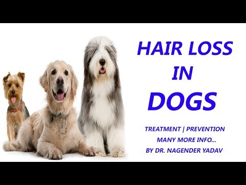 Hair loss Problems in Dogs | Treatment | Dr Nagender Yadav
