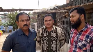 Hyderabad Deccan ke desi pigeons of Raof Bhai by Irfan Khan