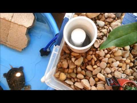Indoor Turtle Pond Aquaponics/Biofilter - Build and Setup