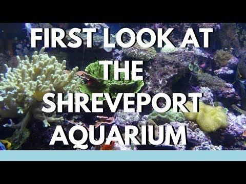 Sneak Peak at the Shreveport Aquarium