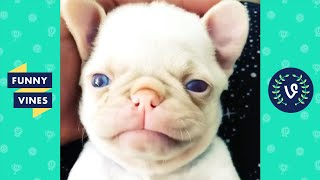 """""""CUTEST THING EVER! 😍""""   CUTE & FUNNY PETS AND ANIMALS"""