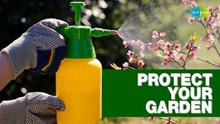 Protect your garden | Gardening tips | Nani maa ke nuskhe | Saregama Podcast