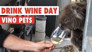 Boozy Pets   Drink Wine Day!