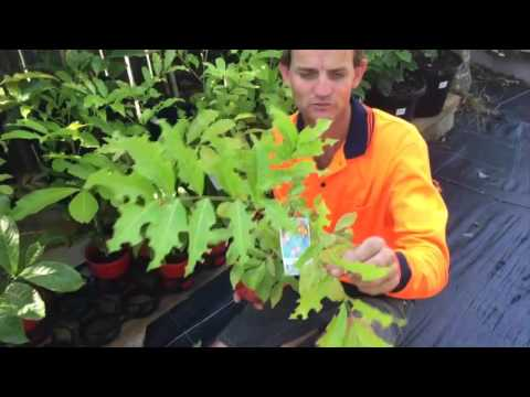 Russell Young shows leaf cutter bee damage