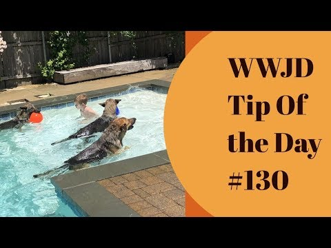 Stop doing so much with your dog, What Would Jeff Do? Dog Training Tip of the Day #130