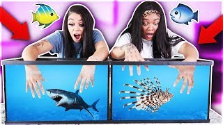 Download WHAT'S IN THE BOX CHALLENGE - UNDERWATER EDITION OCEAN ANIMALS!! Video