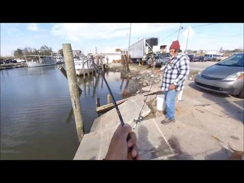 Roadside Redfish Too Easy! This is Why Texas Banned Fishing During the Freeze