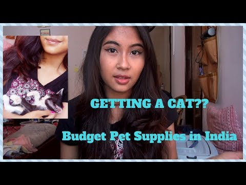 ADOPTING A Cat + Budget Pet Supplies in India 🐱 // Life Updates