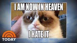 Grumpy Cat: World Bids Farewell To Meme Sensation   TODAY