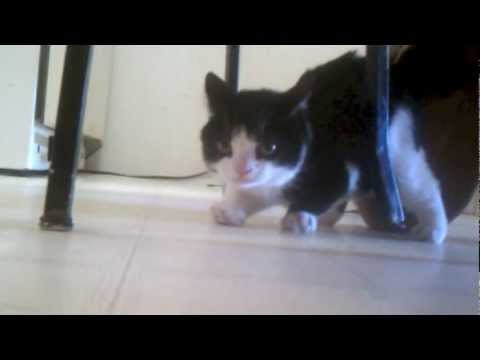 Meet Pokey - Grumpy Cats Brother!