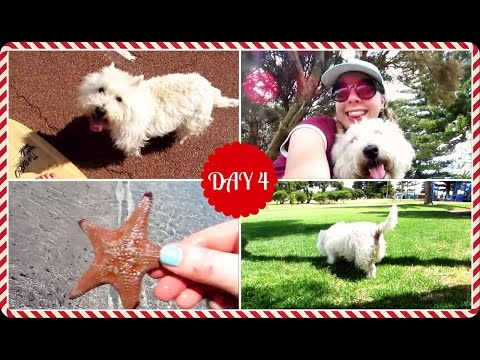 THE MOST PERFECT DAY | DOGMAS