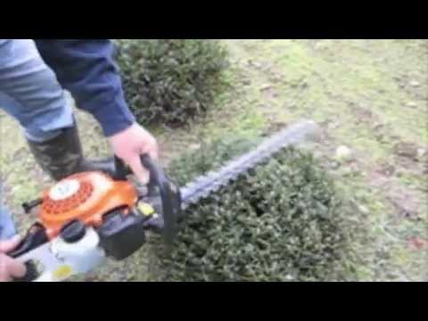 Pruning Lavender with a Gas-powered Hedge Trimmer.m4v