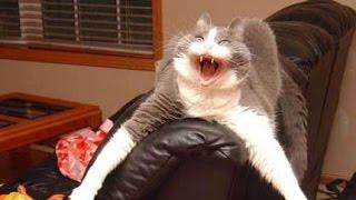 Funny crazy cat videos  - Compilation 2016