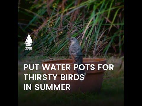 Put Water Pots for Thirsty Birds In Summer - Tahaan