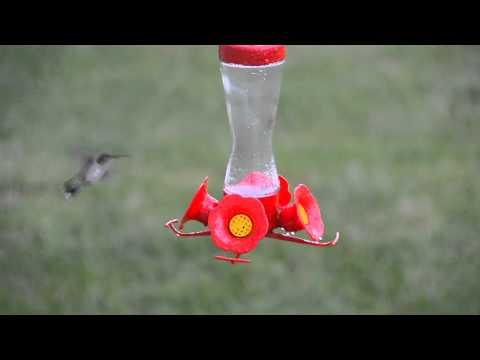 JSchmitt-HummingBirds-Aug15