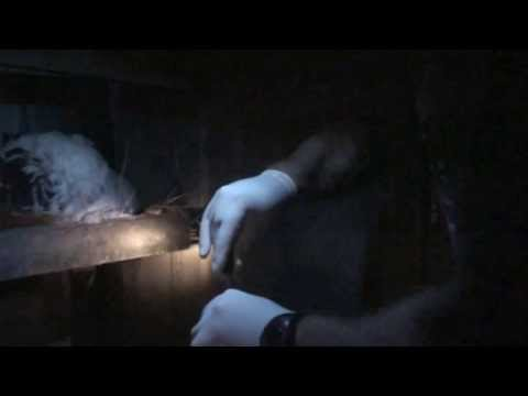 Nighttime Worming Mite and Lice Treatment for My Chickens