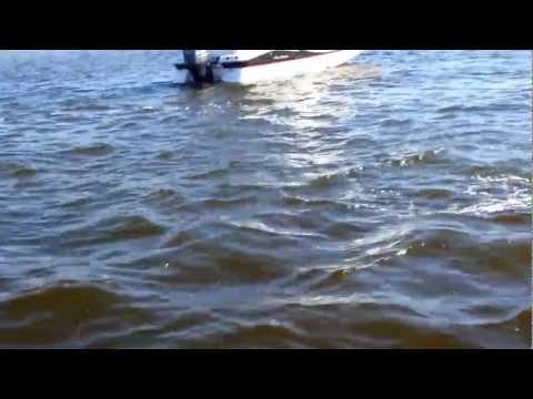 Wild Dolphins just off Pine Island Florida