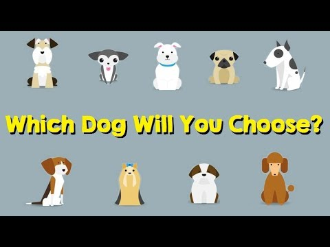The Dog You Pick Will Reveal Your True Personality