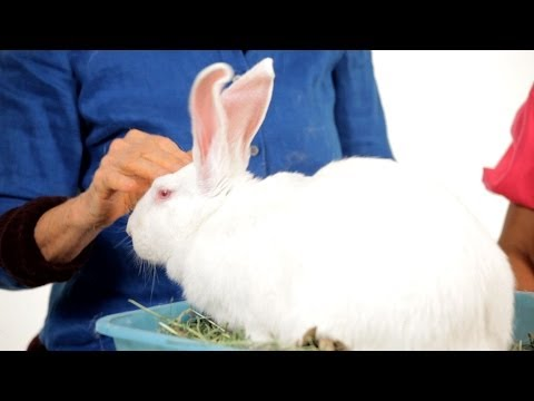 Do Rabbits Get Along with Other Pets? | Pet Rabbits
