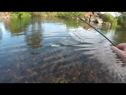 Ultralight Fishing For Trout With Lures. Good Session.