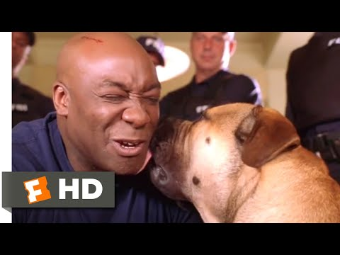See Spot Run (2001) - He Needs a Family Scene (8/8) | Movieclips