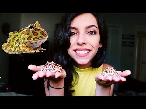 FEEDING MY BABY PACMAN FROGS