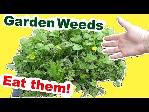 Foraging Wild Edibles: Fix your garden problem by eating the weeds