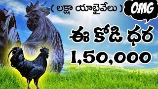Most Expensive Chicken Breed in the World | ప్రపంచంలోనే అత్యంత ఖరీదైన కోడి..! | ayam cemani