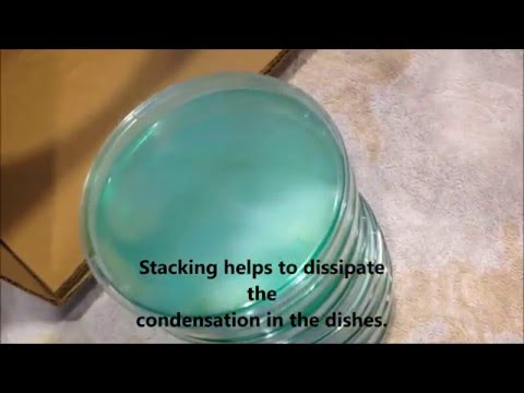 Making Potato Dextrose Agar Petri Dishes for LEGAL GOURMET Mushroom Cultivation