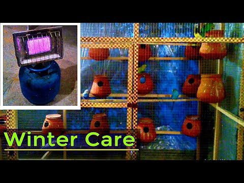 How i keep my birds safe in Winter ?