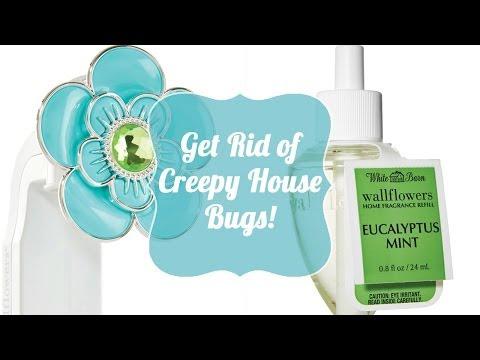 Get Rid of Creepy House Bugs!