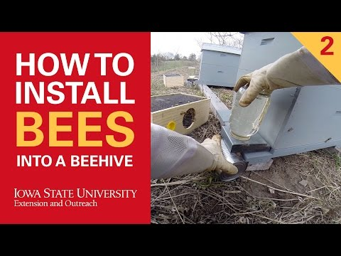 How to Install Bees Into a Beehive Part 2