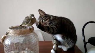 Cat Gently Pets A Bird