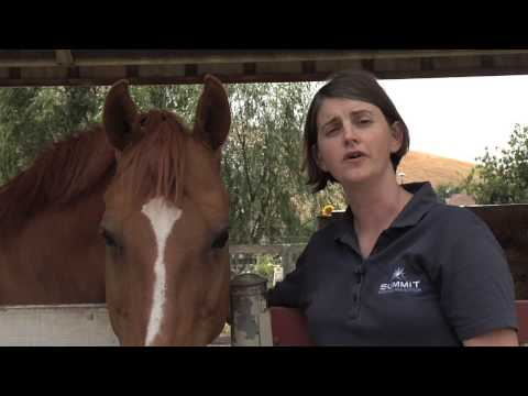 Equine nutritionist Clair Thunes speaker at Pacific Sport Horse Selection University 2014