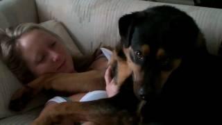 Rocky the lap dog