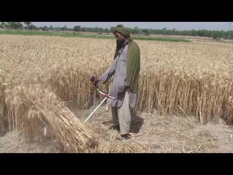 Wheat/Paddy/Rice Cutting Machine Portable
