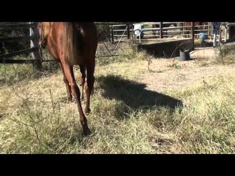 Missin Cash's latest foal.m2ts