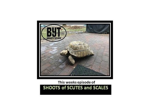 Backyard Tortoises Weekly Update: Shoots of Scutes and Scales! episode 1